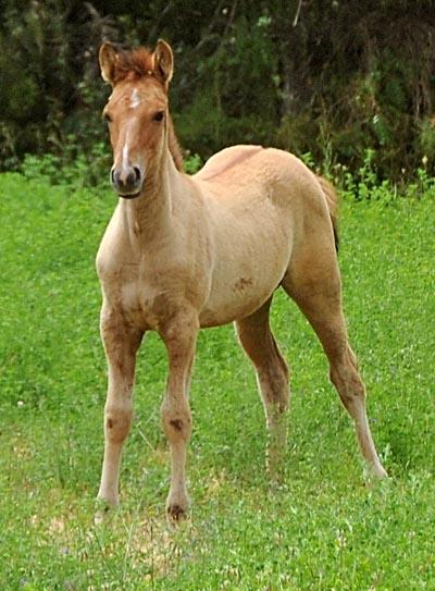 chile, coquimbo, horses