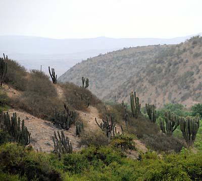 chile, coquimbo, chilean landscape