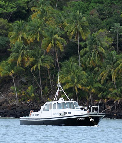 devils island, coconut palm scenery