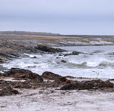 Rocky coast of the Falkland islandsz