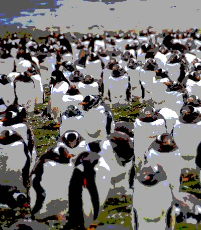 300,000 gentoo penguins