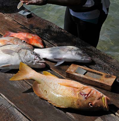 colombia, isla de providencia, the catch