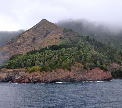 chile, isla robinson crusoe, forests