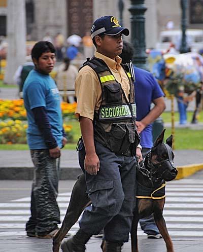 peru, lima, police dogs