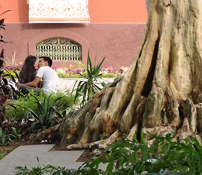 brazil, manaus, tree roots