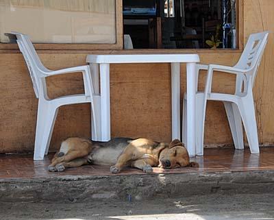 peru, paracas, dogs