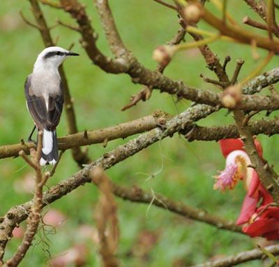 brazil, rio de janeiro, bird life