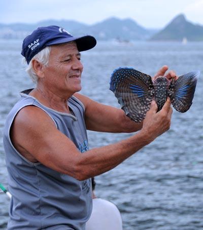 brazil, rio de janeiro, bird fish