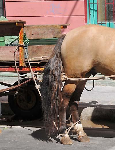 chile, valparaiso, horses