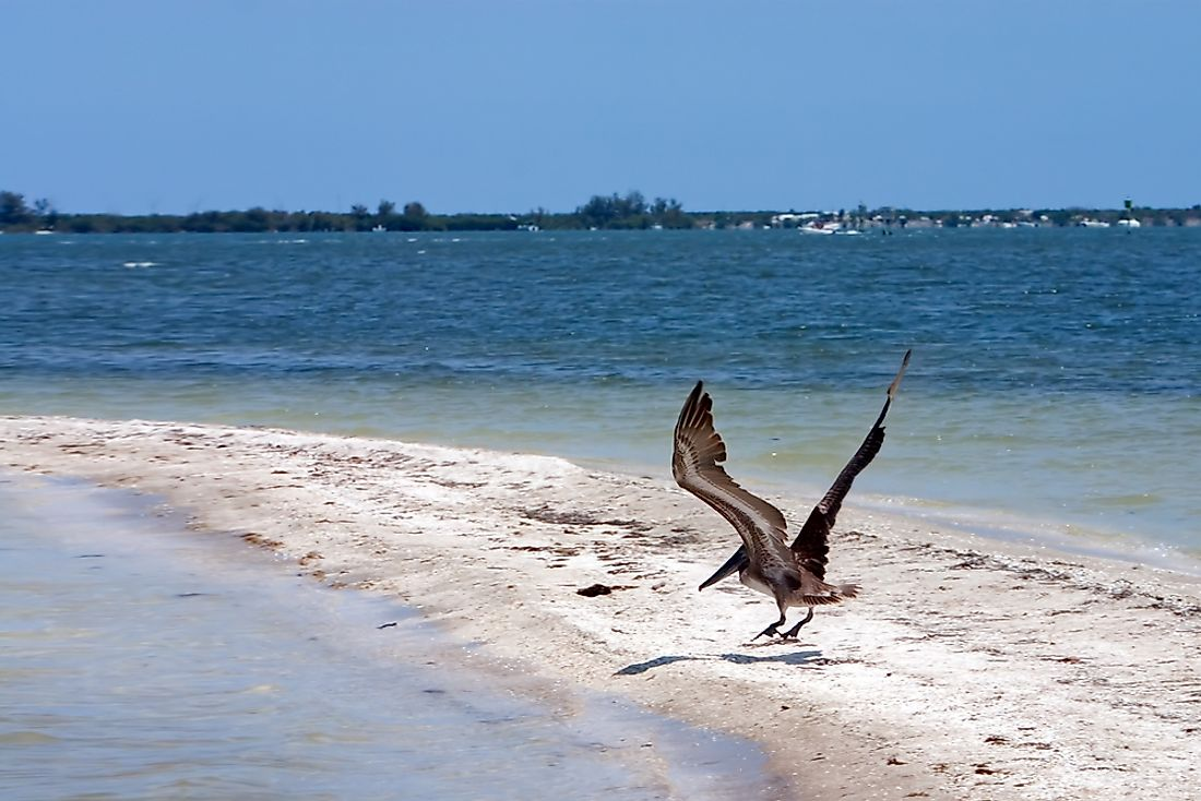 The Indian River Lagoon in Florida is in a humid sub tropical climate environment, and is the most biologically varied estuary in North America.