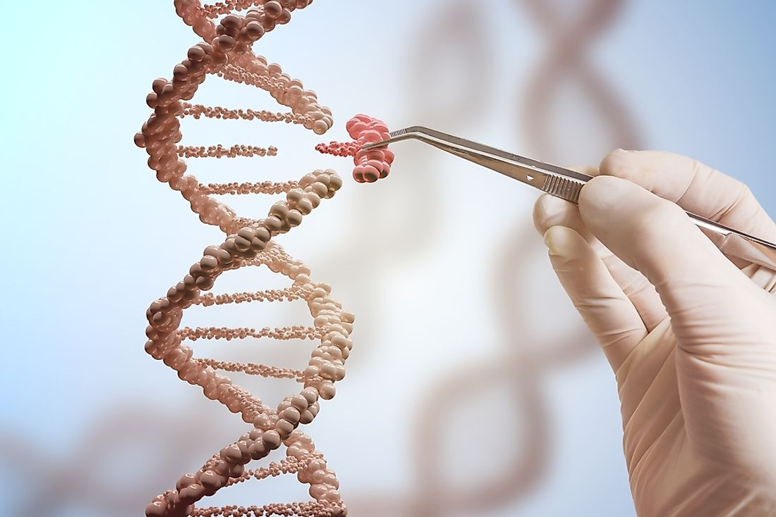 The replacement of a DNA component as part of genetic modification.