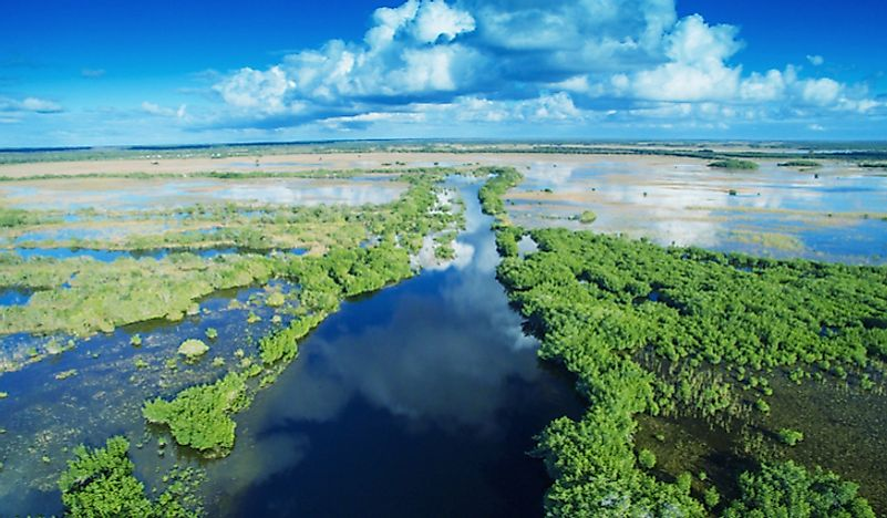 An overview of the Florida Everglades.
