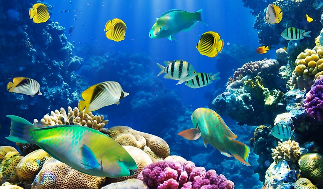 Different fish species at a coral reef.