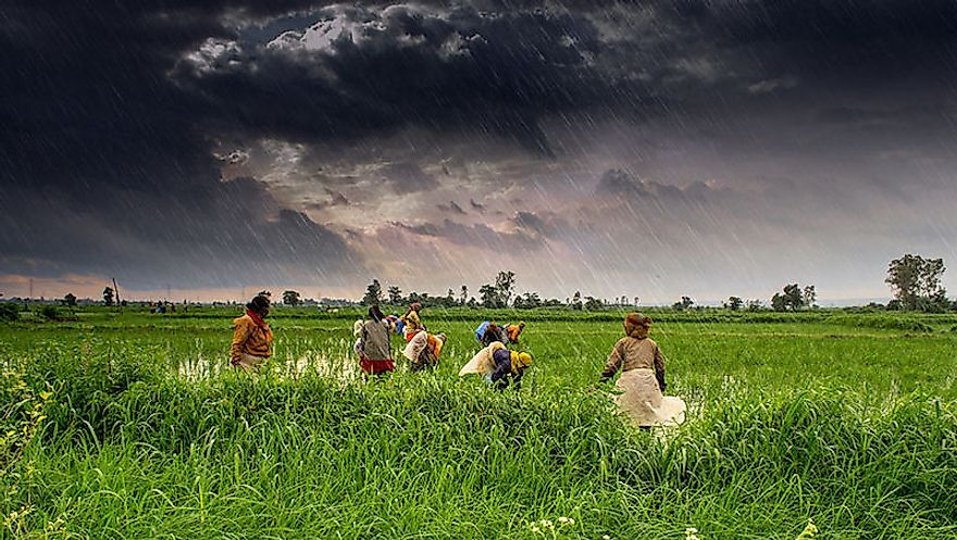 With its huge wealth of fertile lands, India is able to generate sufficient crops to feed its own population.