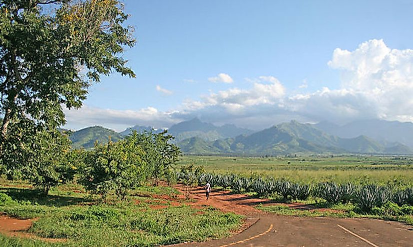 A sisal plantation in Morogoro, Tanzania with the Uluguru Mountains visible in the background.