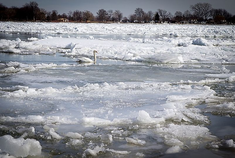 A Swan braves the brutal cold in the partially frozen waters of the St. Clair River near Port Huron, Michigan.
