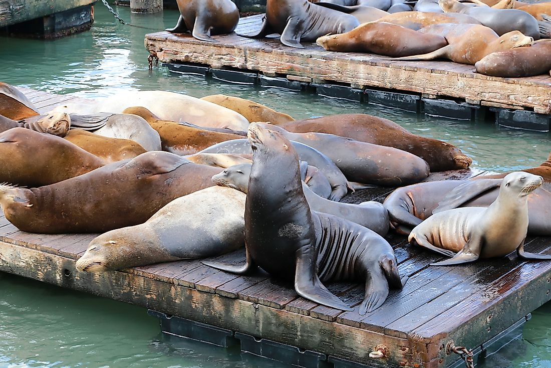 Fisherman's Wharf - maybe worth it to see the sea lions.