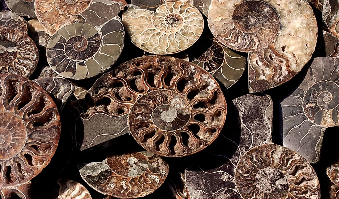 Died-out Cephalopoda mollusks - ammonites.