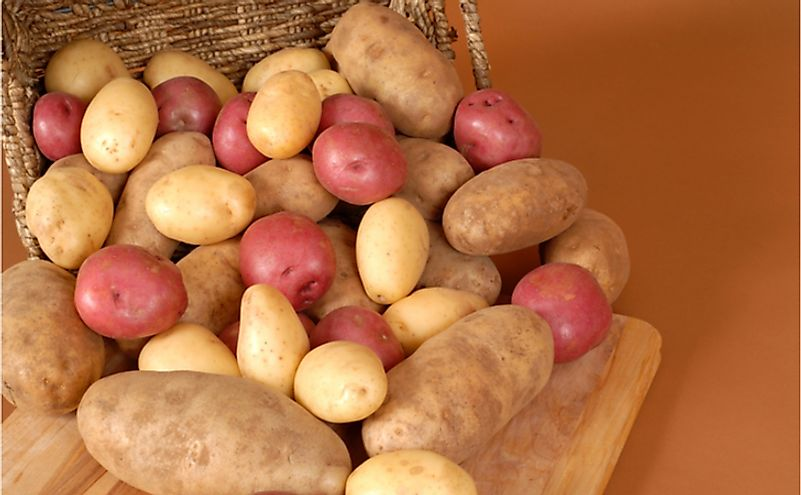 Potato is a major crop grown in the United States.