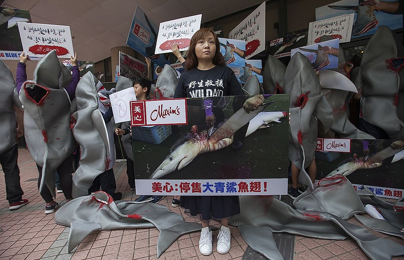 Shark fin protest an Maxim's restaurant at the University of Hong Kong 10 February 2018. Image credit: Socheid/Wikimedia.org
