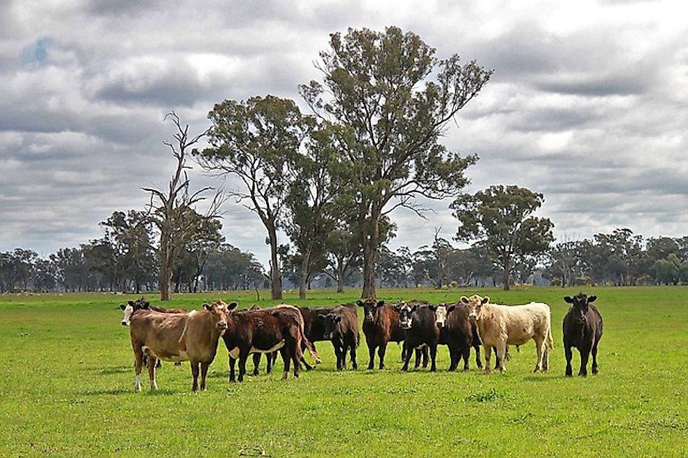 Top 10 Agricultural Exports Of Australia - WorldAtlas com