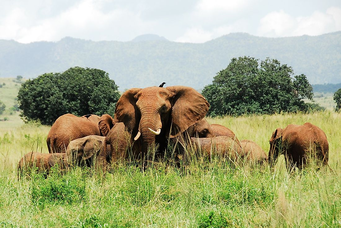 Elephants in Kidepo Valley National Park.