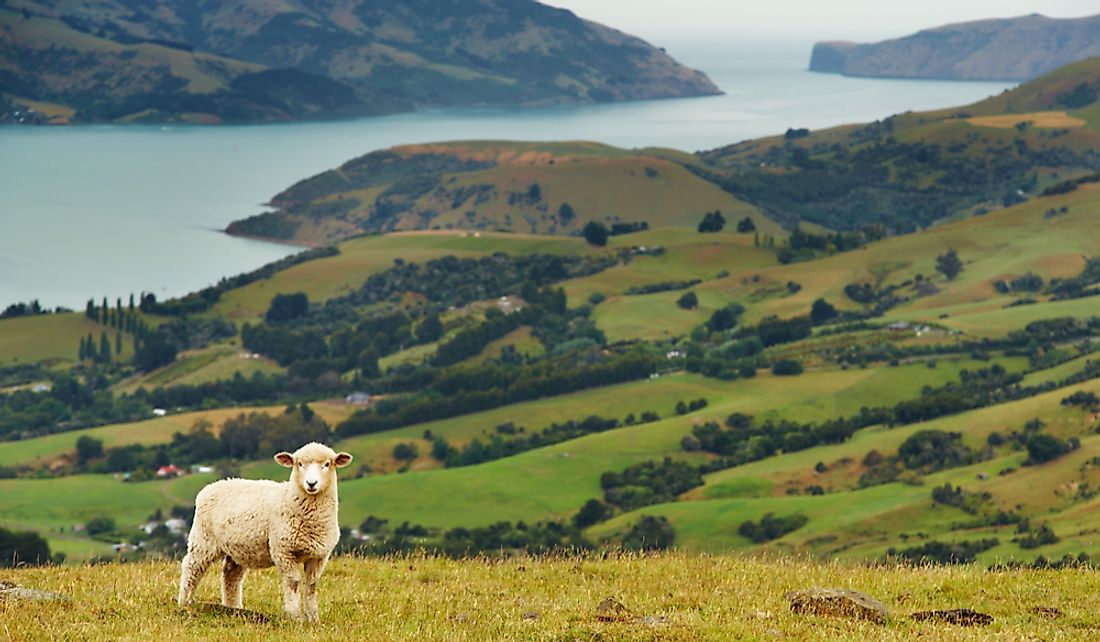 Sheep and agricultural land on the Banks Peninsula in New Zealand.