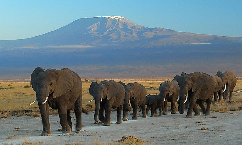 Elephants in a Tanzanian national park with Mount Kilimanjaro in the background.