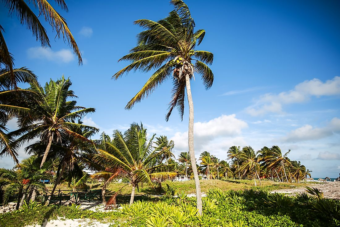 Some plant species, like palm trees, thrive in tropical environments.