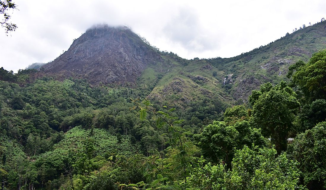 Forested hills of the Eastern Ghats in India.