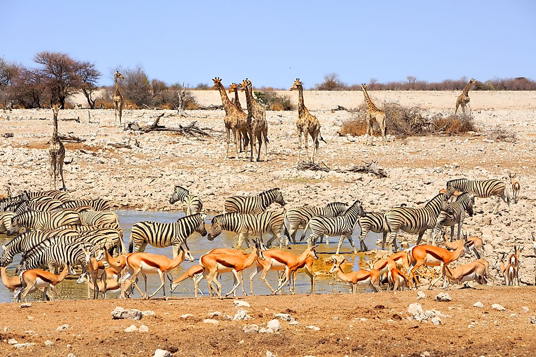 Wildlife in Namibia.