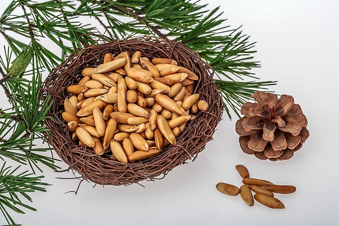 Pine nuts are the seeds of the pine tree.