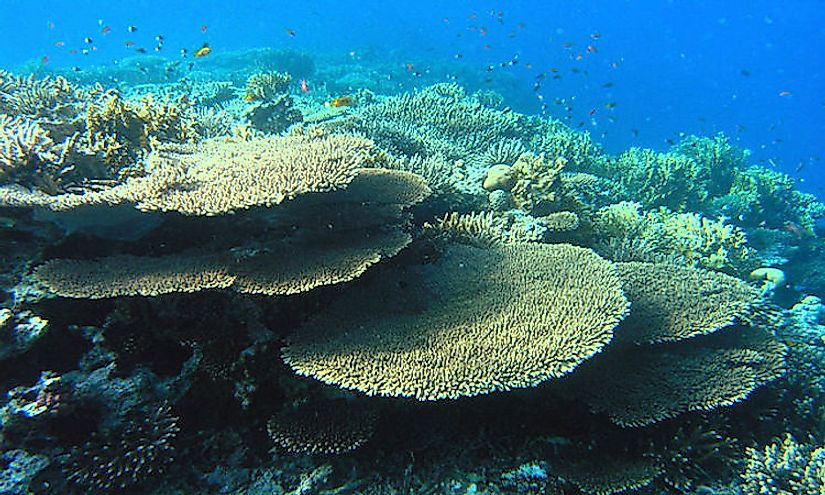 Coral Reef in the Southern Red Sea region.