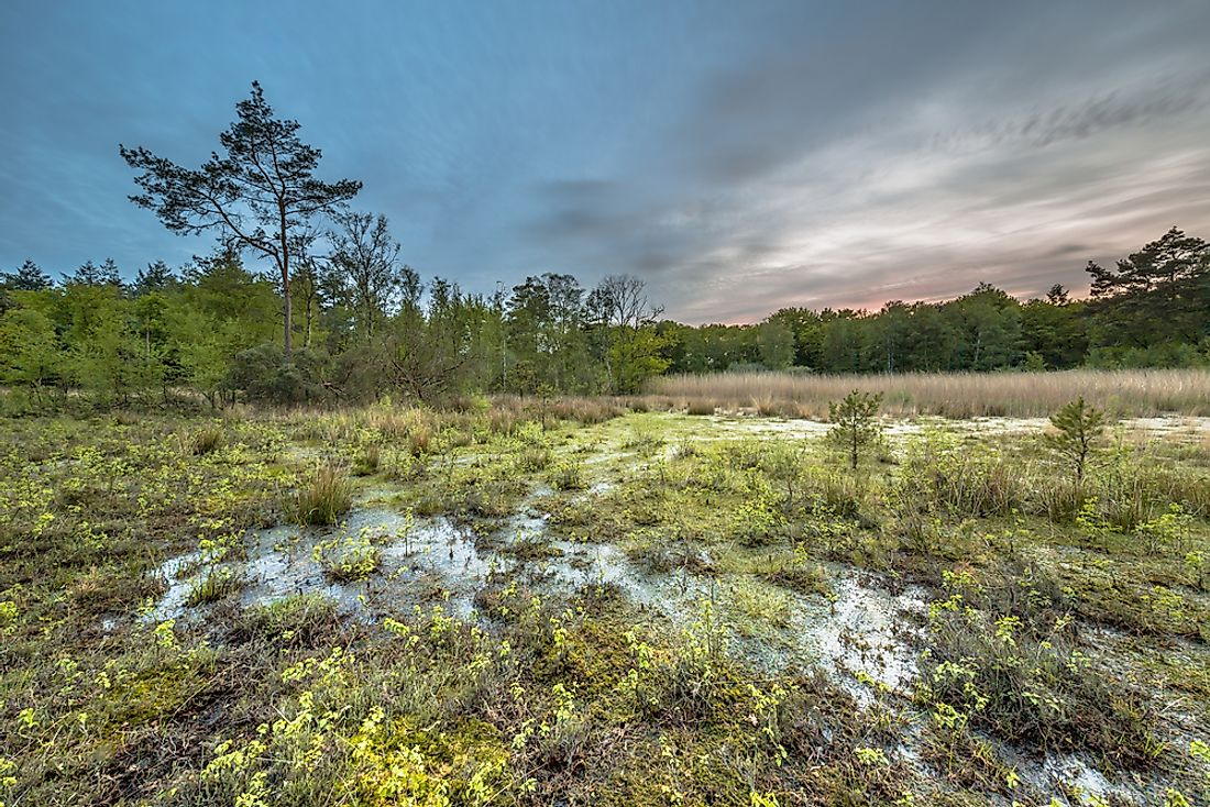 The Northern European Plain contains fertile farmland, as well as many bogs, heaths, and lakes.