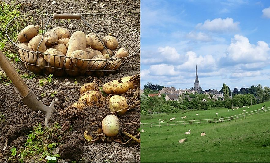 In addition to new technology, the introduction of potatoes and the fencing off of pasture both dramatically changed Scottish agriculture.