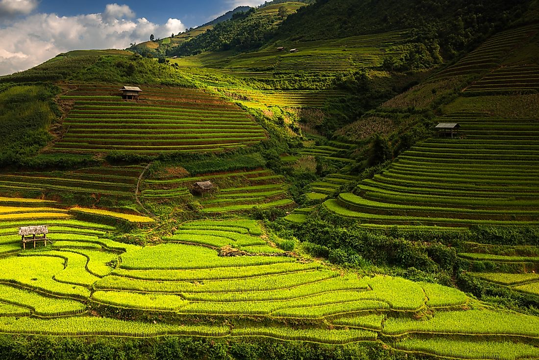 Rice terraces of the Philippines.