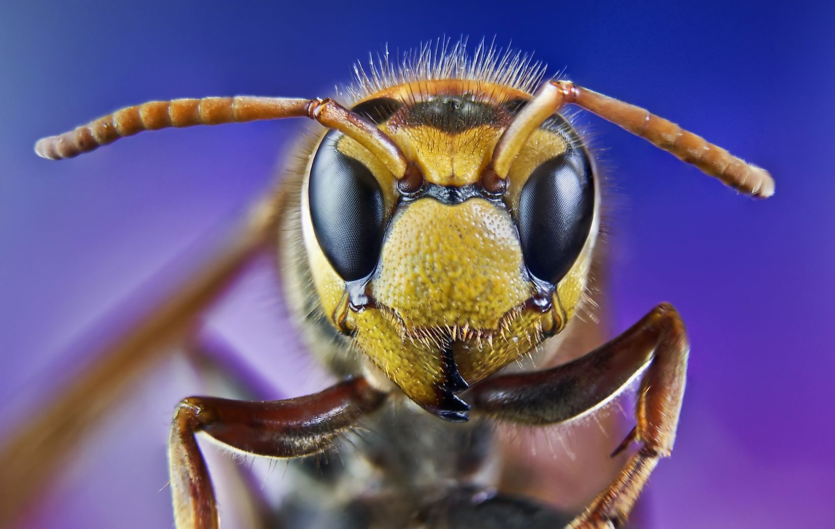 While we would die in the absence of insects, sometimes insects can also kill us. Image credit: MURGVI/Shutterstock.com