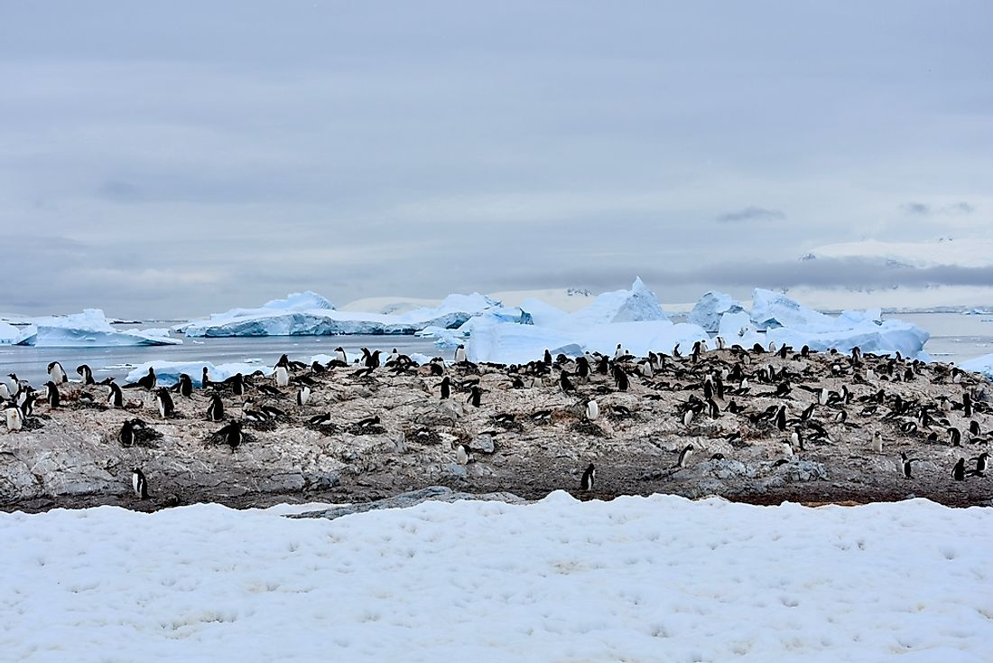 A penguin colony is pictured here near Cuverville Island, Antarctica.