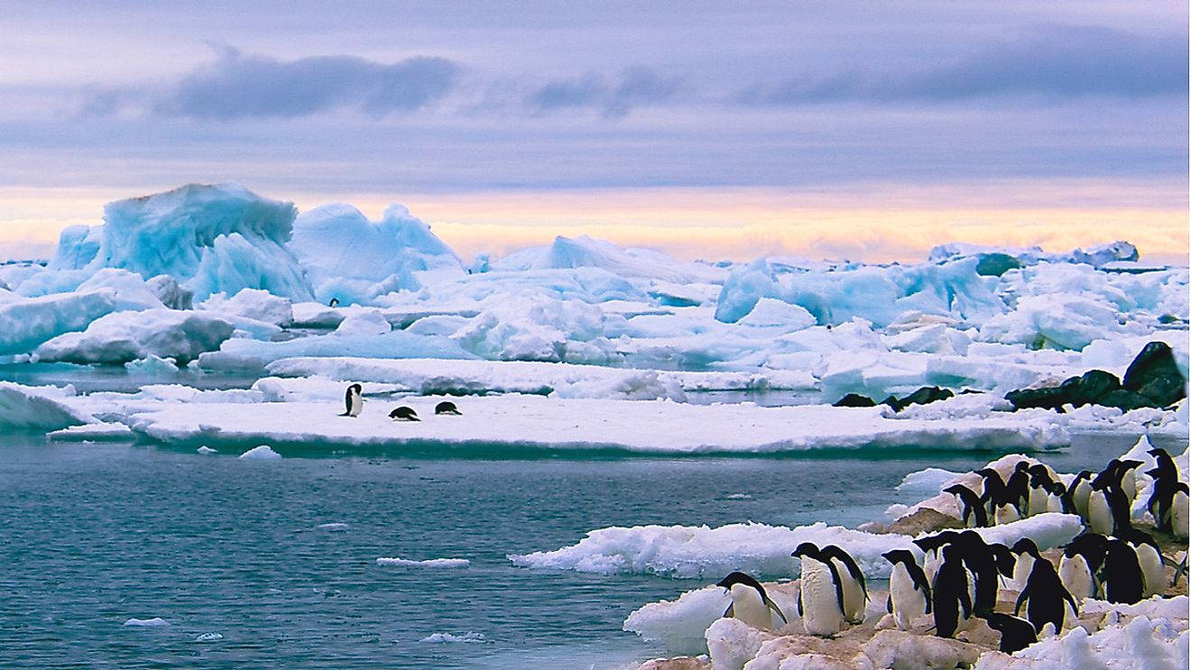 Penguins on an iceberg in Antarctica. Image credit: Alexey Suloev/Shutterstock