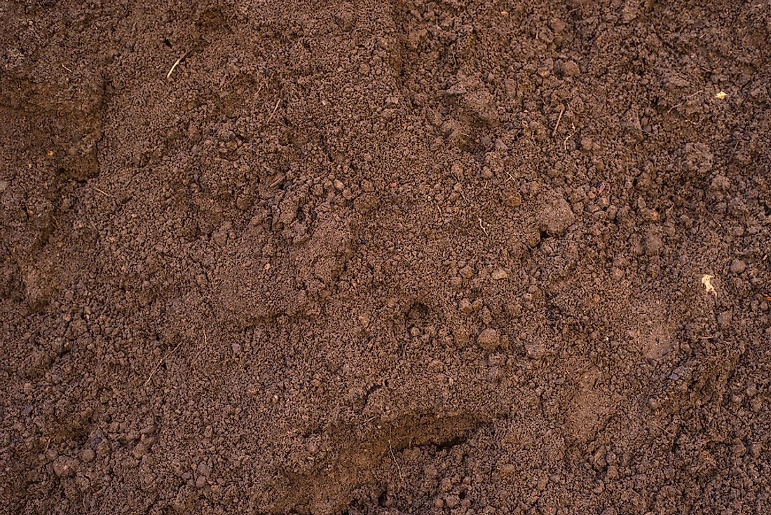 Loam soil is composed of a mix of sand, silt, and clay. Sandy loam (pictured) has a higher concentration of sand than silt.