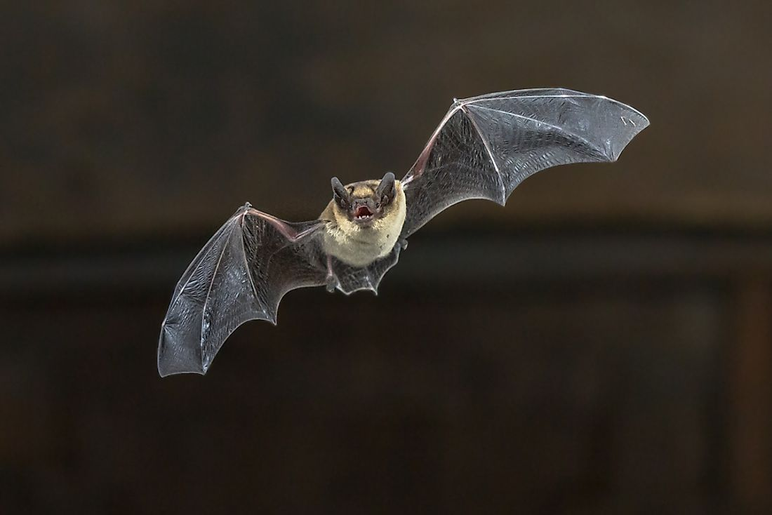 "Bats are some of the few mammals which are able to use the sound to ""see"" in the dark."