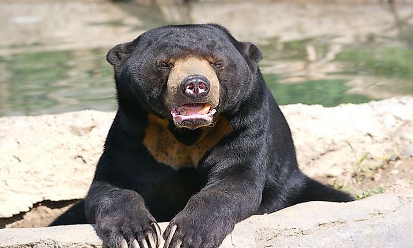 How Many Types Of Bears Are There Living In The World? - WorldAtlas.com