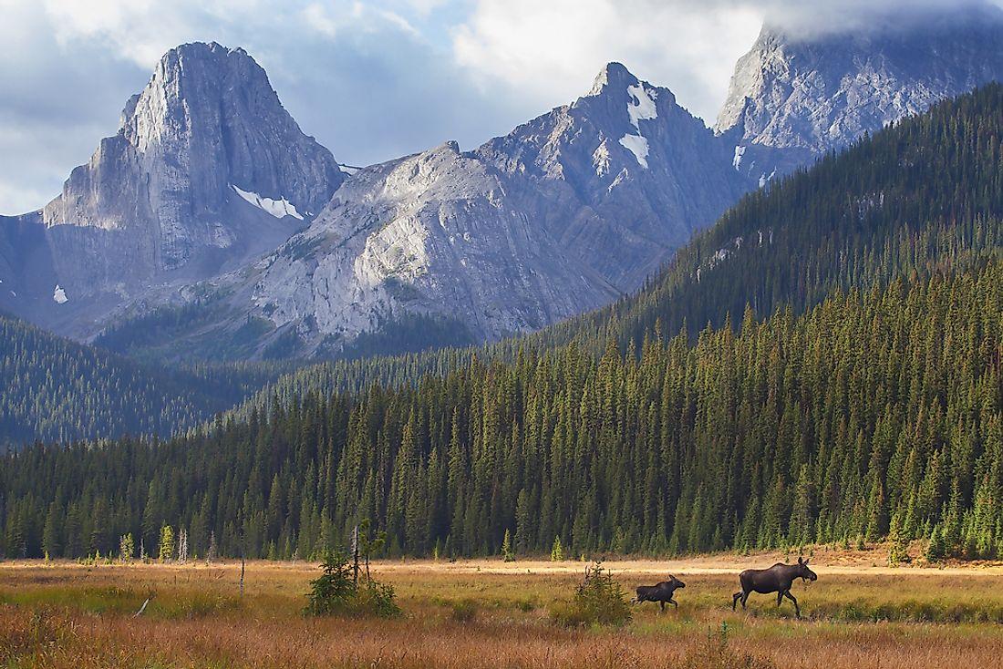 Animals That Live in Canada - WorldAtlas