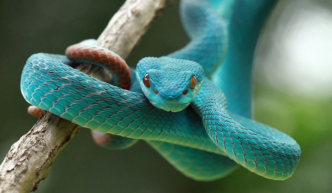 Snakes are found on all continents except Antarctica.