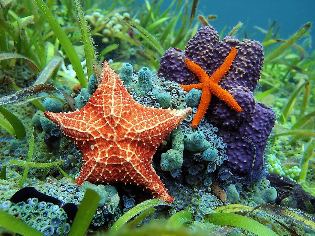 Echinoderms are known for their pentaradial symmetry, meaning five-sided bodies.
