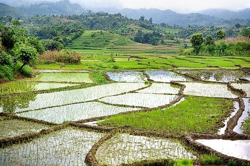 Water to grow crops to feed its 1.3 Billion people, such as these rice paddies in the hills, is the primary use of water in India.