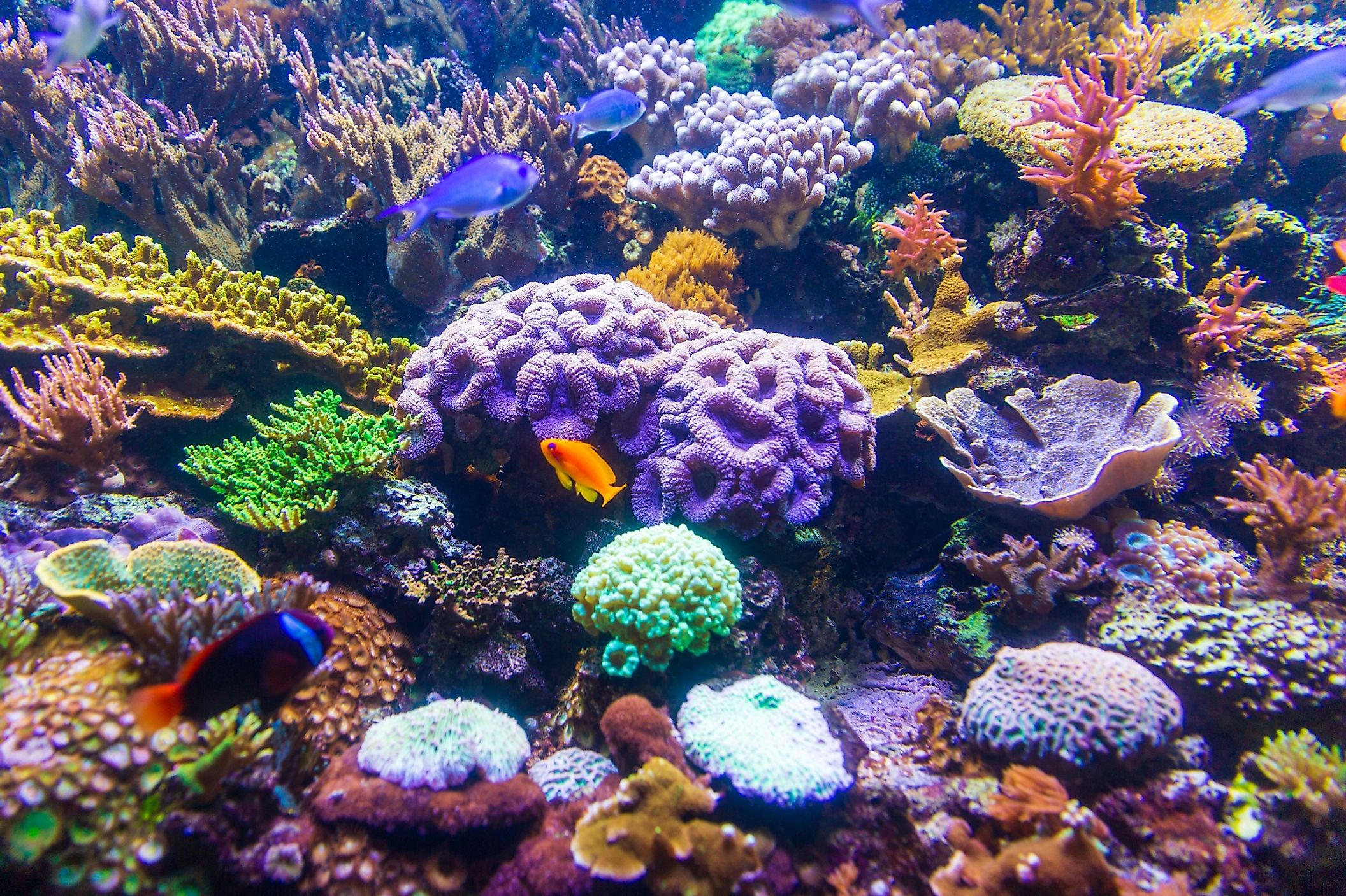 Human being's actions such as pollution, destructive fishing practices, and coral mining all hurt the coral reefs.