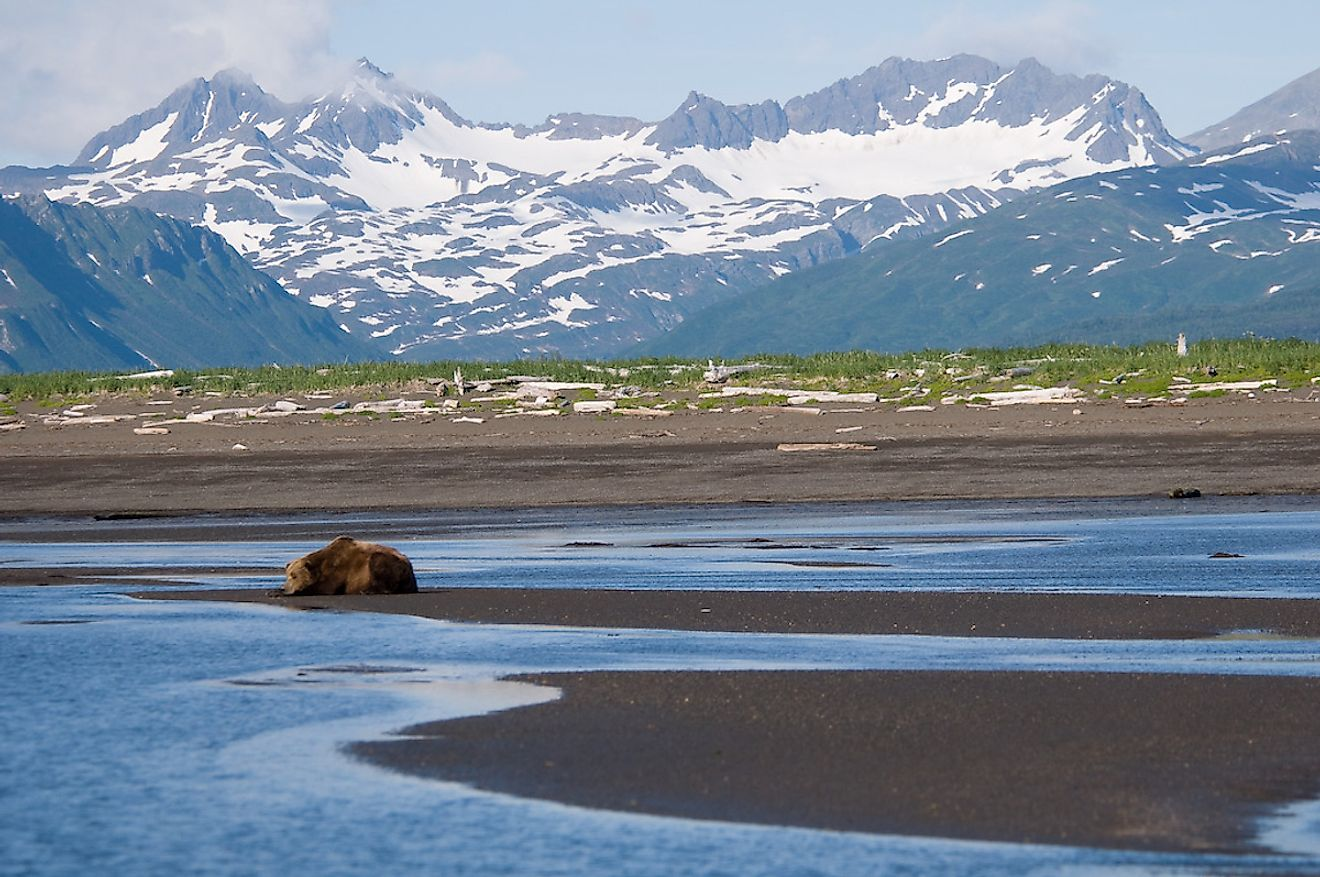 Alaska Brown Bear, Hallo Bay, Katmai National Park, Alaska. Image credit: Marshmallow from Seattle/Wikimedia.org