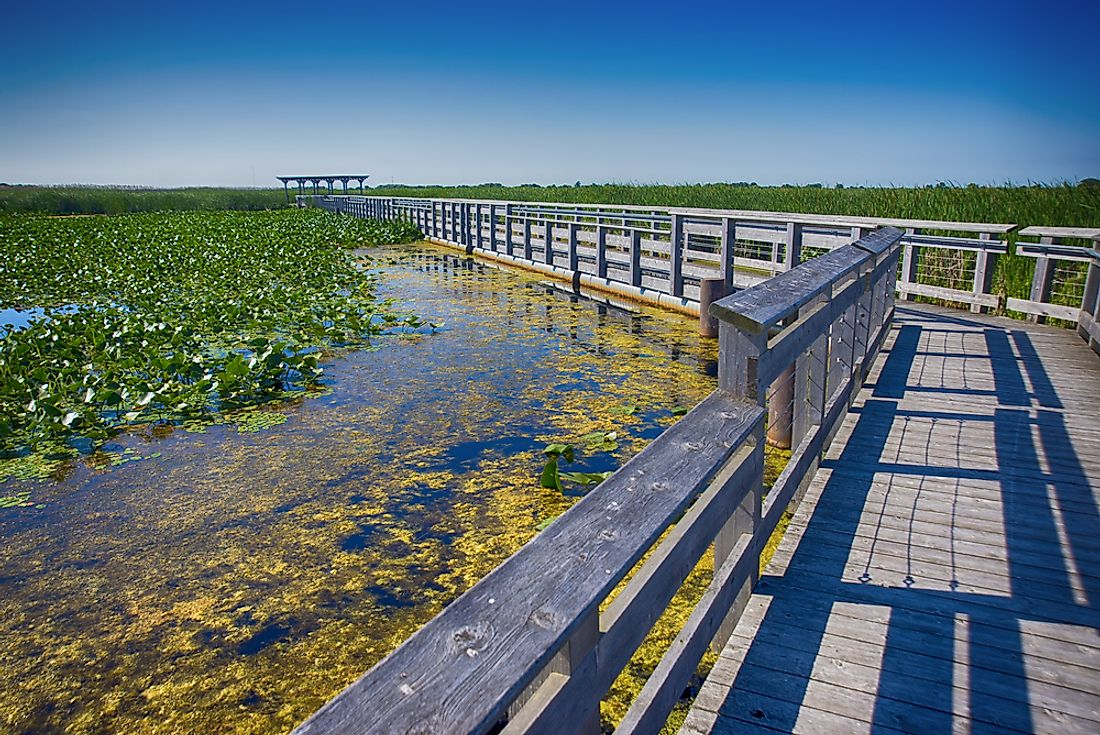 The boardwalk at Point Pelee National Park.