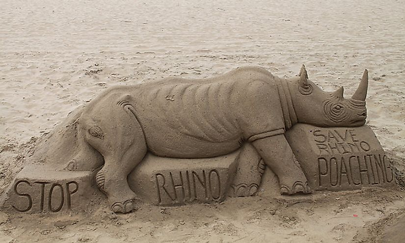 All the five extant types of rhinos are threatened by human activities and greed, and need to be urgently saved.